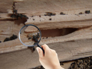 What Termite Inspectors Search For?